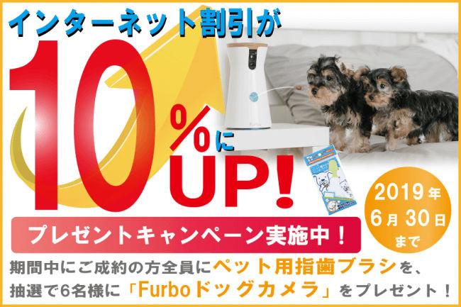 ペット保険 プレゼントキャンペーン
