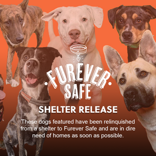 Large Rescue - Puppy Mill Seizure - Urgent (October 9, 2021)