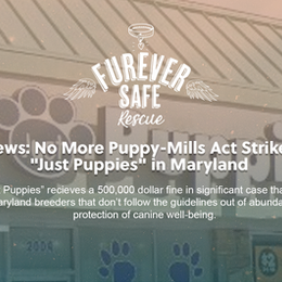 """News: No More Puppy-Mills Act Strikes """"Just Puppies"""" in Maryland"""