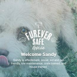 Newcomer: Sandy