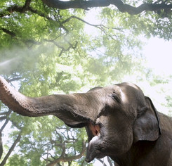 72-banner_mara-el-viaje-de-la-elefanta