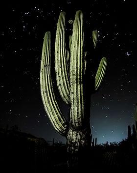 Cactus Nocturno.jpg