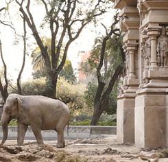 72-frame1_mara-el-viaje-de-la-elefanta