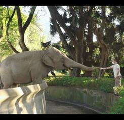 72-frame3_mara-el-viaje-de-la-elefanta
