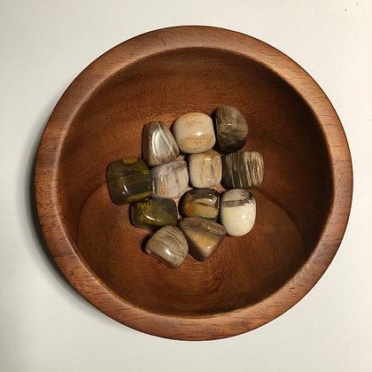 Petrified Wood Tumbled - LMG Rocks and Crystals