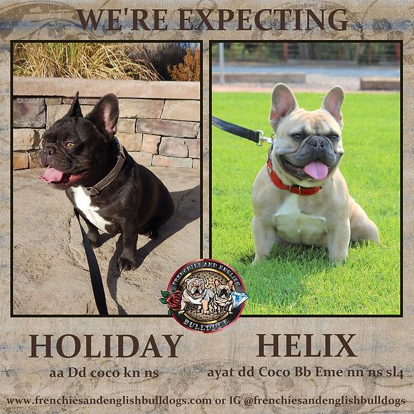 holiday & helix-001.jpg
