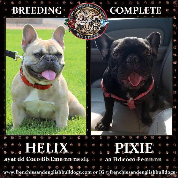 helix&pixie-001.jpg