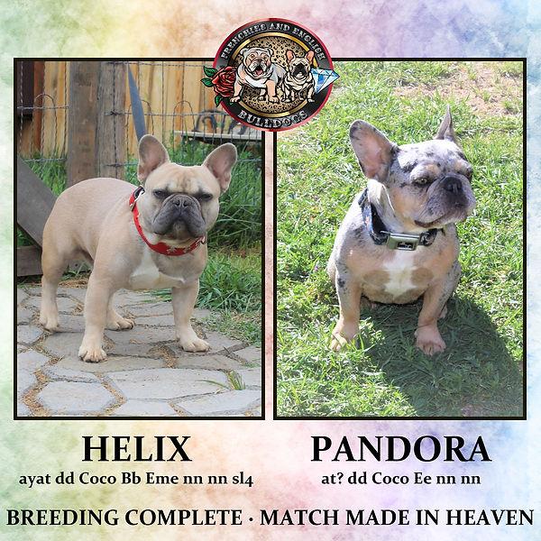 pandora&helix-001.jpg