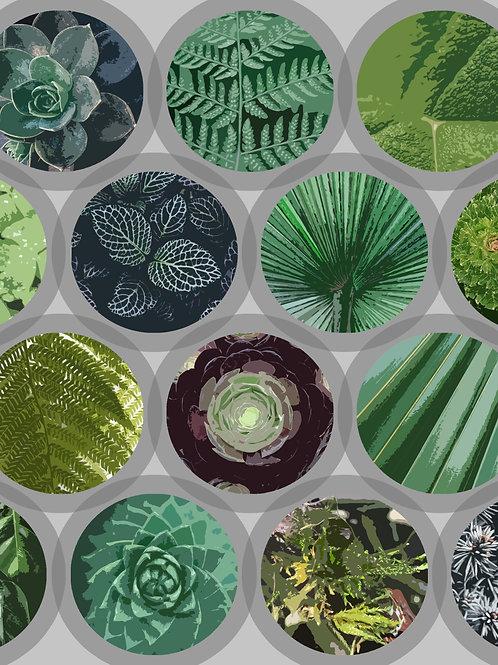 Green Garden Windows - Art Print