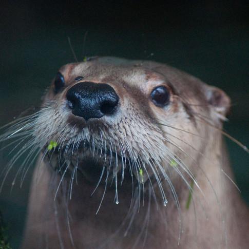 DSC_3112_retouch-Otter.JPG