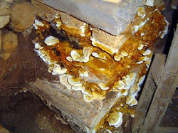 DRY ROT IN BASEMENT