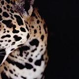 guerrero-pueblo-jaguar.jpg