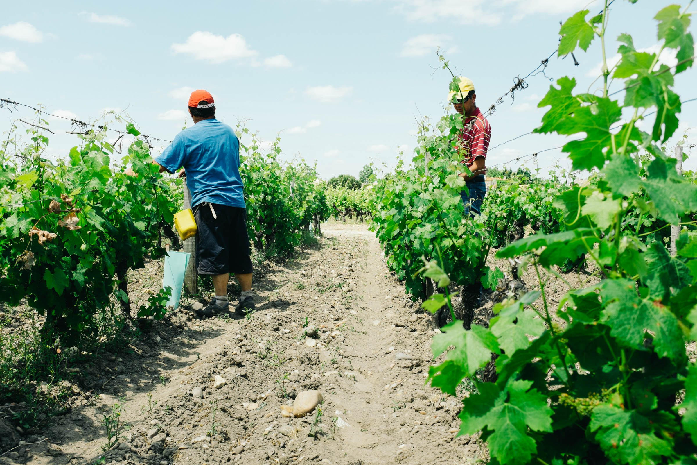 The work in the vines