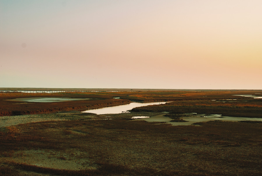 Rye Harbour Nature Reserve, Winchelsea #1