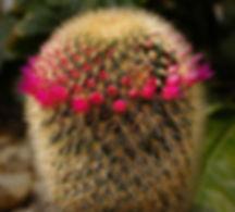 Cactus Texture