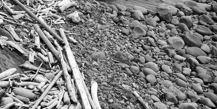Beach Debris showing Balance of  Texture