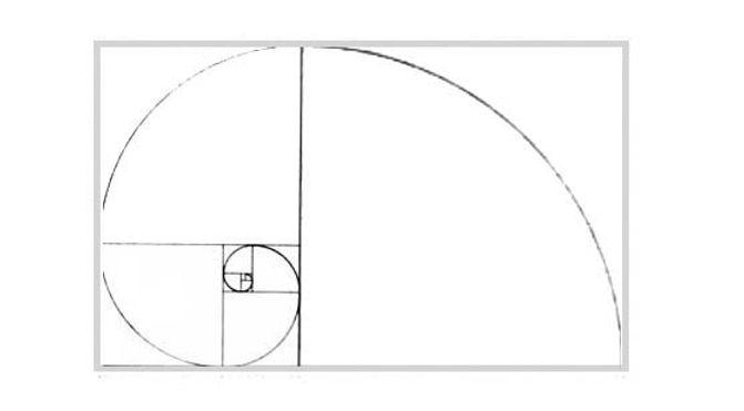 Fibonacci Spirals in Nature