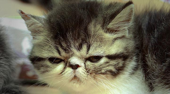 Kitten   © John Lovett
