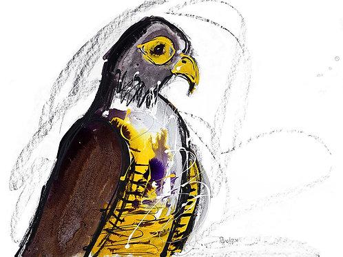 Peregrine Falcon (PRINT)
