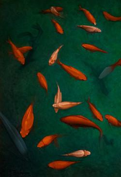 Ronde des poissons
