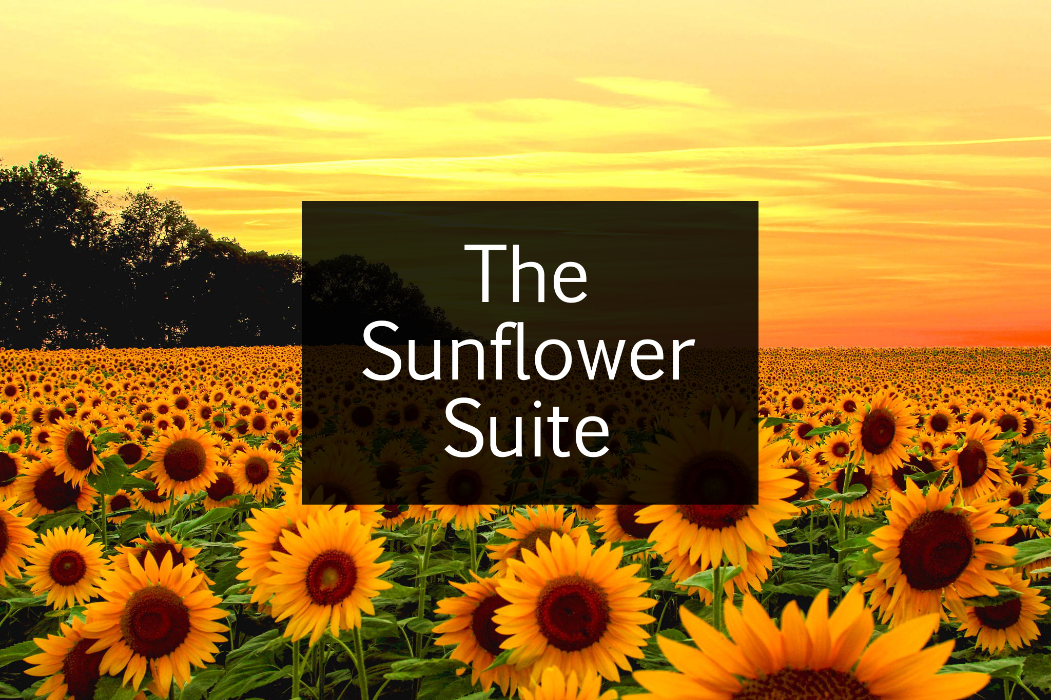 The Sunflower Suite