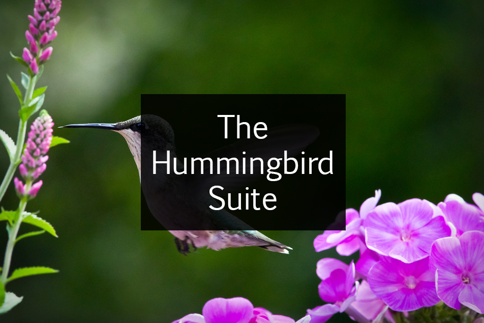 Hummingbird Suite