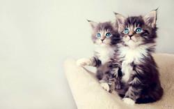 Cat-Wallpaper-High-Resolution