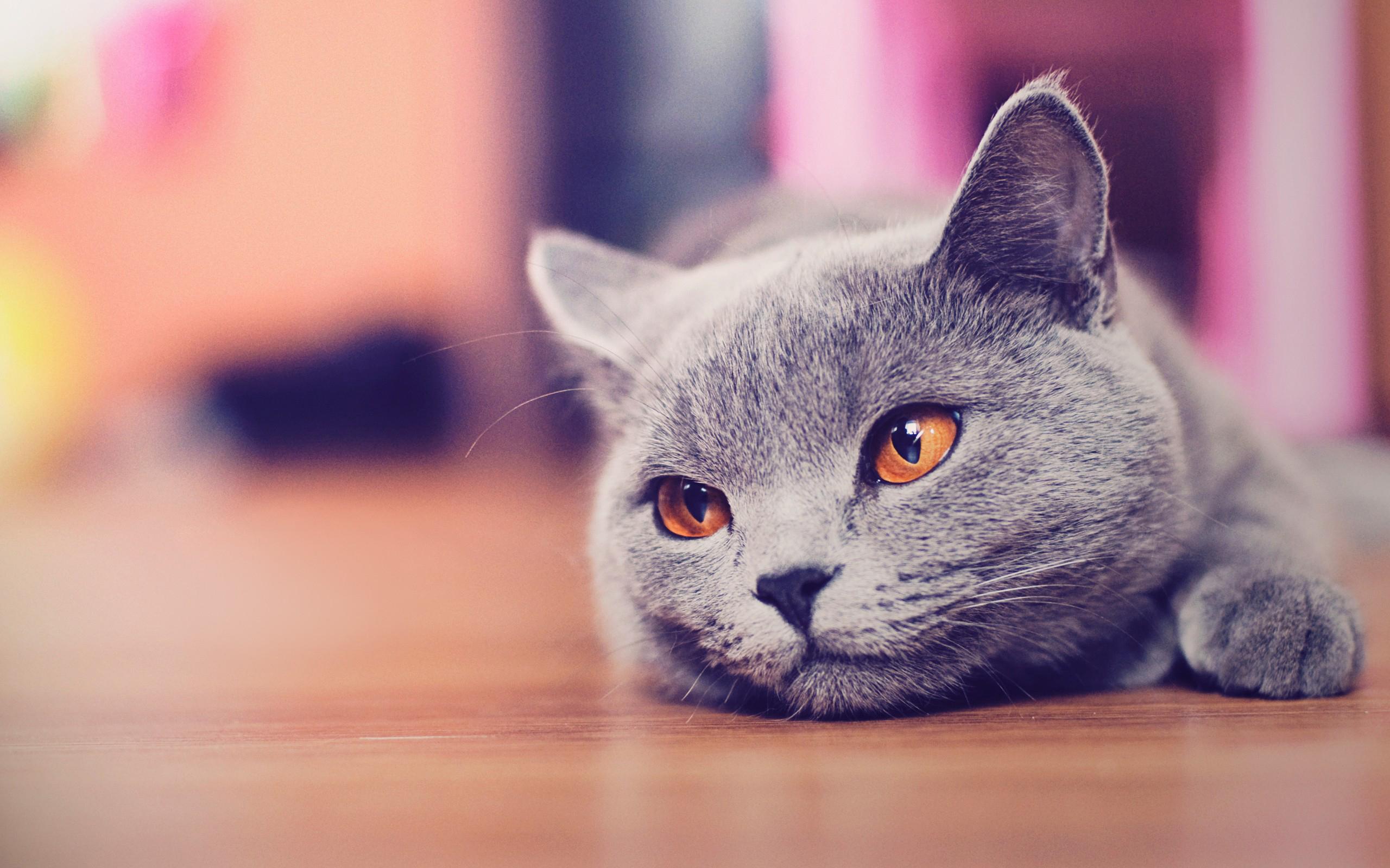 cat-high-resolution-wallpaper
