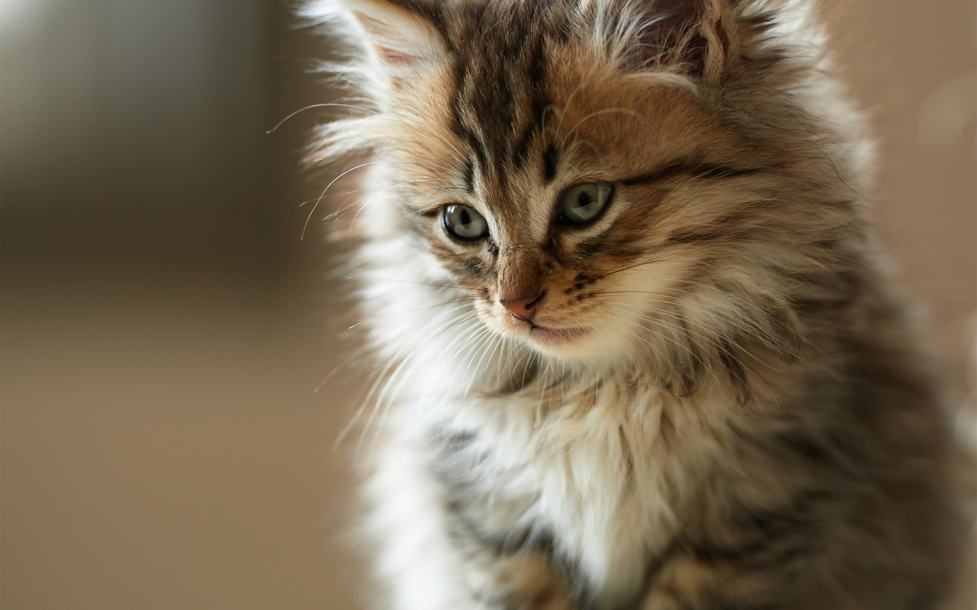 cute-cats-1080p-wallpapers