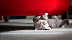 wallpapers-hd-cats-12