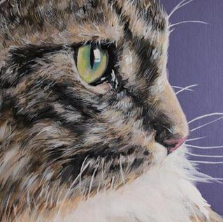 Norweigen Forest cat