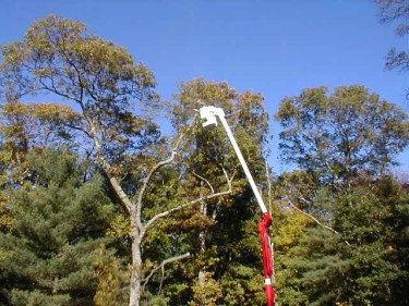 treeService.jpg