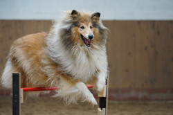 Hundespaß auf der Vita-Farm