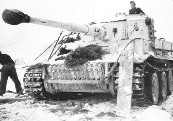 Tiger in Vitebsk.jpg