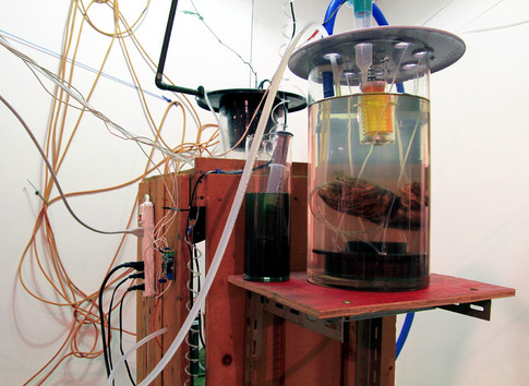 Experiments In Plant Intelligence