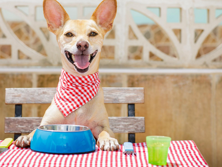 The Complete Truth About Raw And Kibble In The Same Meal