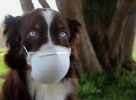 Can my dog give me coronavirus?