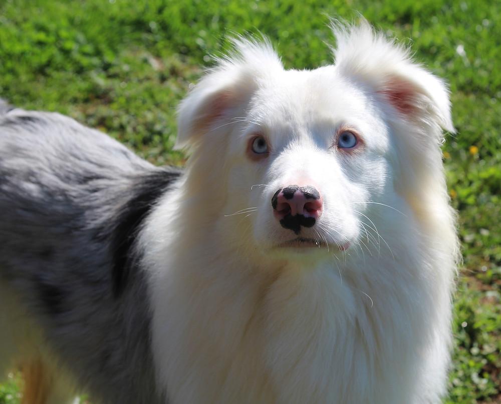 Deaf Dog Myths