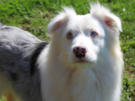 Deaf Dogs Don't Bark and Other Myths Debunked