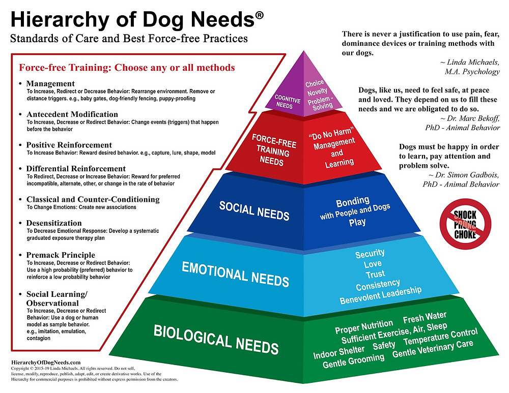 Hierarchy of dog needs