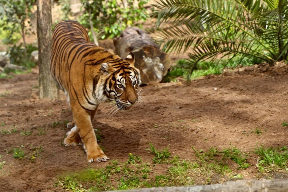 Интересные места Португалии, зоопарк в Лиссабоне