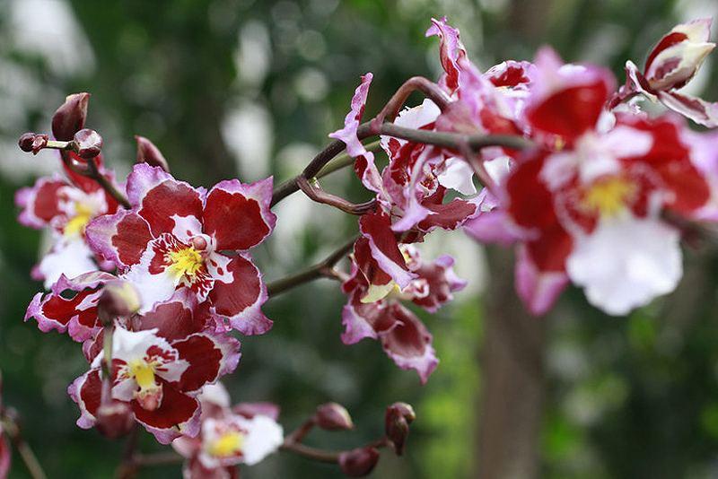 Выставка орхидей в Португалии