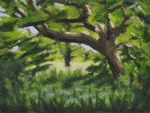 Trees along the River Exe No7 - 19.2 cm x 25.5 cm - Acrylic paint on white board