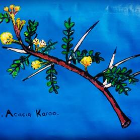 Acacia Karoo| Chronic Countryside.jpg