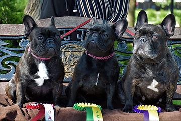 2021 05 Pug club dog show result.jpeg