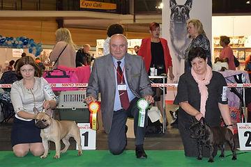 2018_11_11 International dog show Riga W