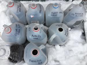 Winter-Sowing with DIY Milk Jug Greenhouses!