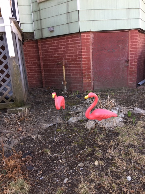 Cheerful, bright flamingos! Who needs the zoo?