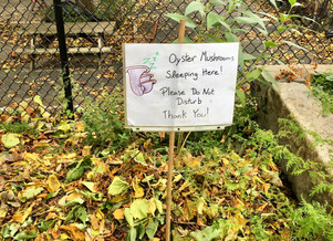 An Autumn Mushroom Experiment at the Growing Center!