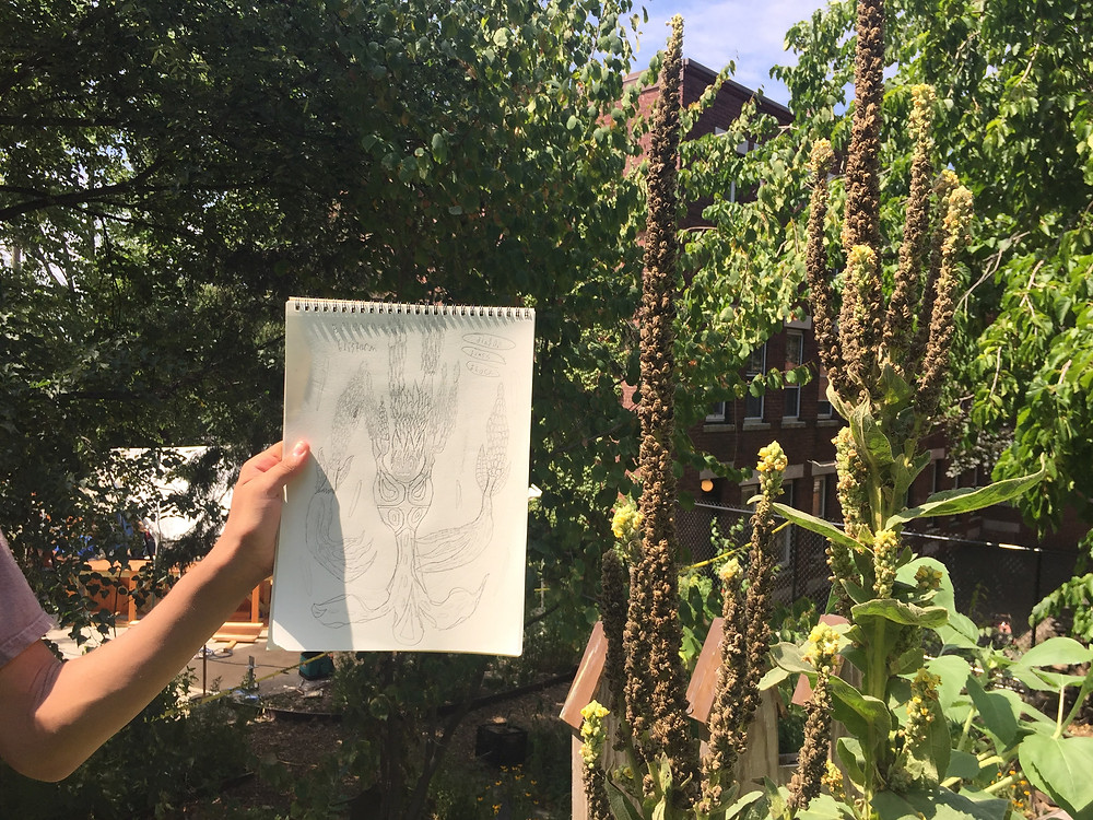 A child showing off a drawing of mullein, a plant in the garden.